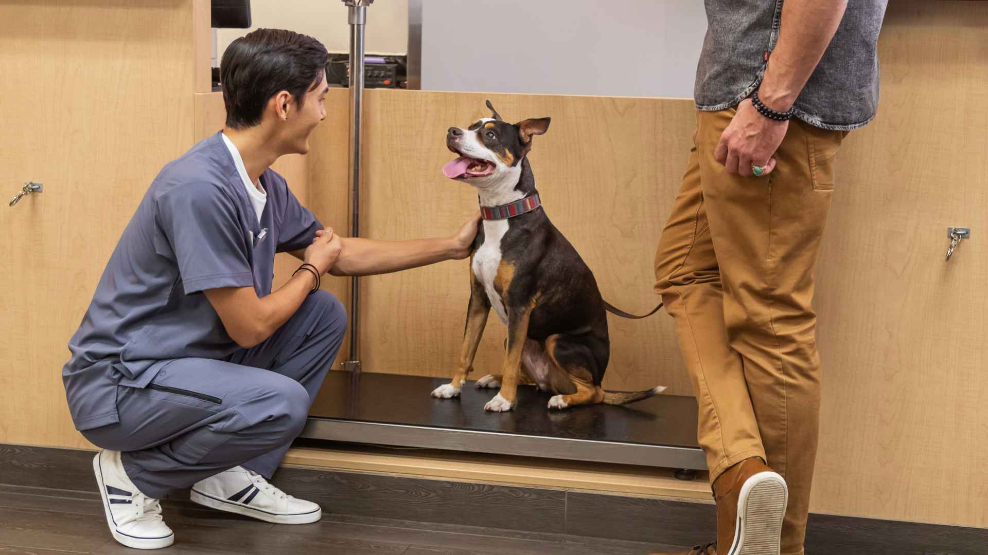 A young male veterinarian squatting and petting a dog while the owner of the dog stands next to him at the Banfield Pet Hospital
