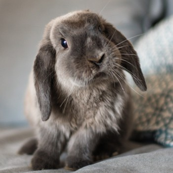 Rabbit sitting in sofa